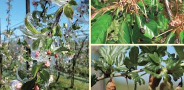 Pflanzenschutz im Erwerbsanbau